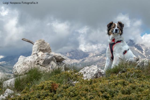 Gran Sasso - Voltigno: Melody sulla cima del Monte Meta