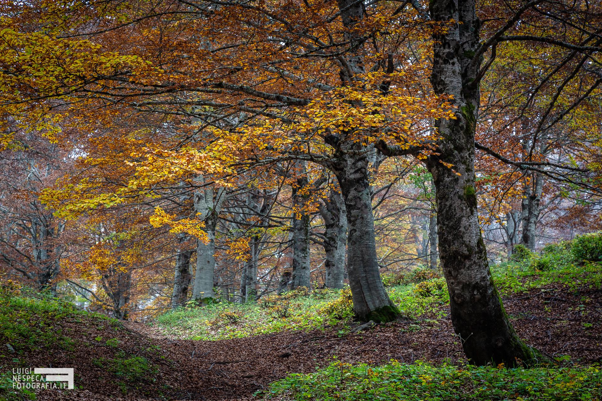 Faggeta autunnale nel Parco dei Monti Simbruini