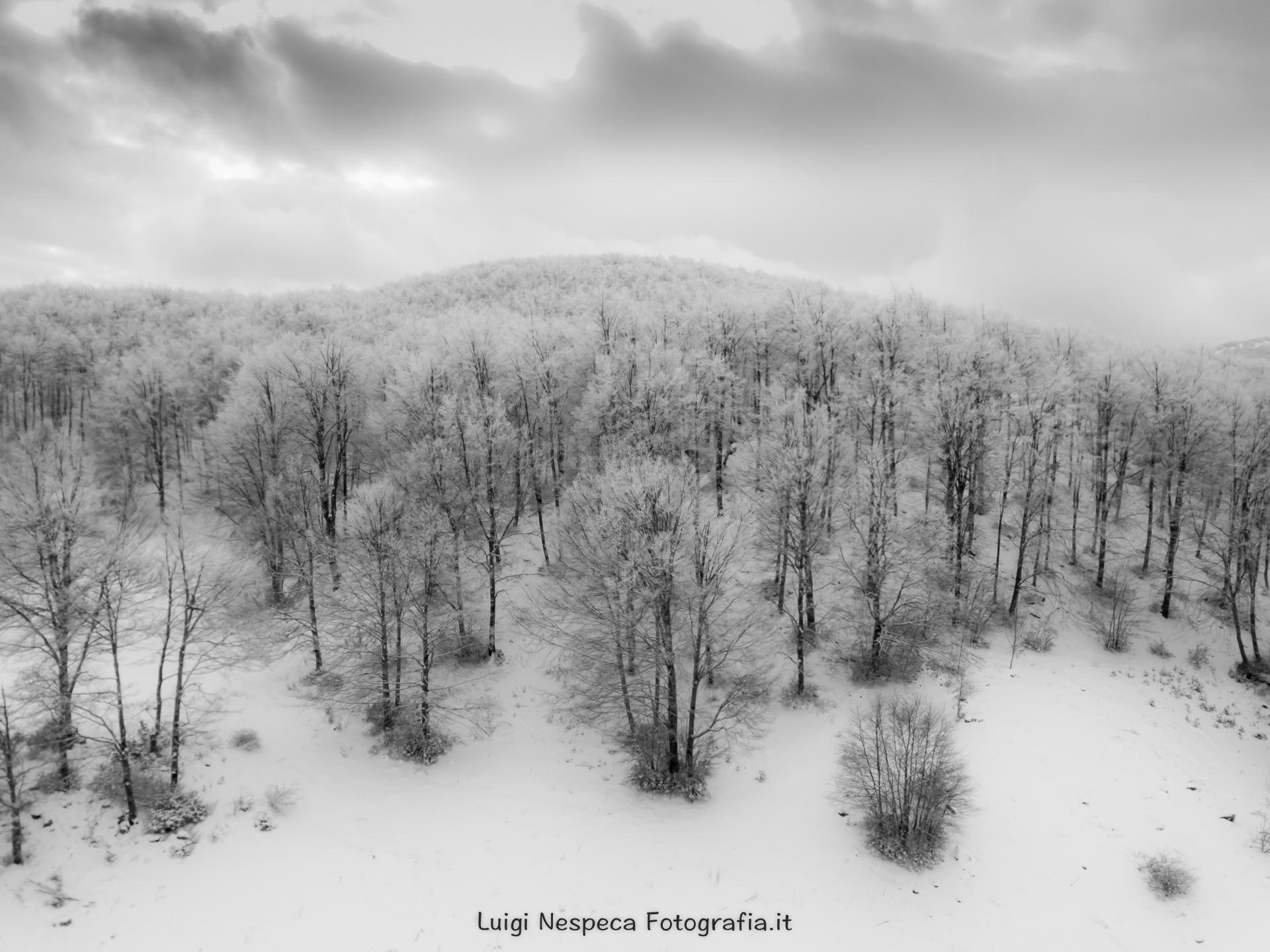 La foresta bianca - Altopiani del Voltigno - Carpineto della Nora (PE)