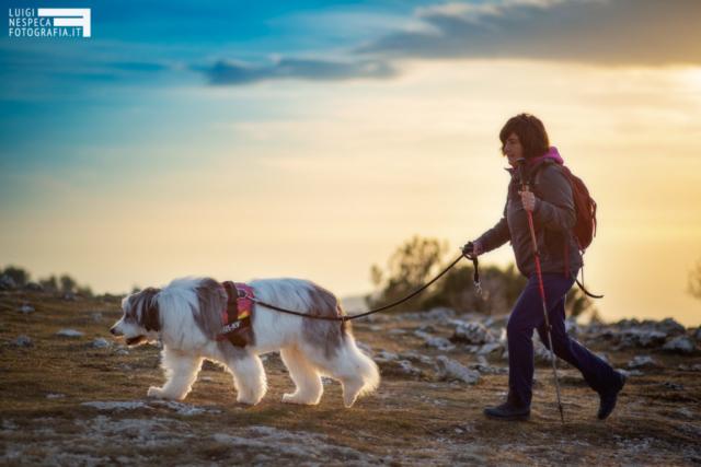Ritratto di Lola al tramonto - Bobtail - Pet Photography