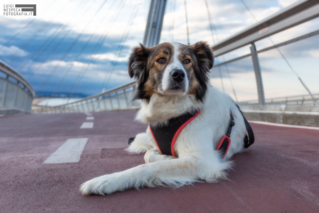 Melody a Pescara - Pet Photography