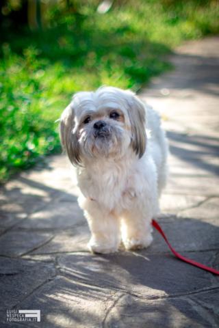 Il cagnolino Freddy - Pet Photography