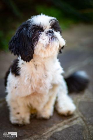 La piccola Mila - Pet Photography