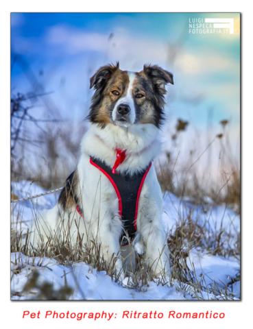 Pet Photography: ritratto con sguardo romantico