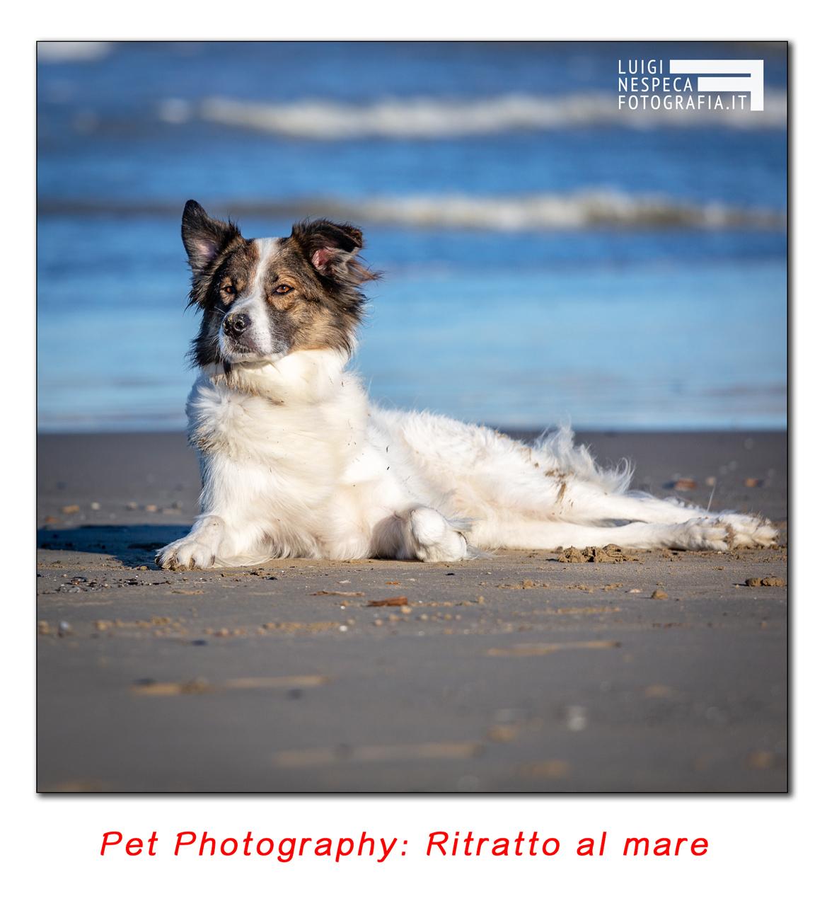 Pet Photography - Reportage: un giorno al mare