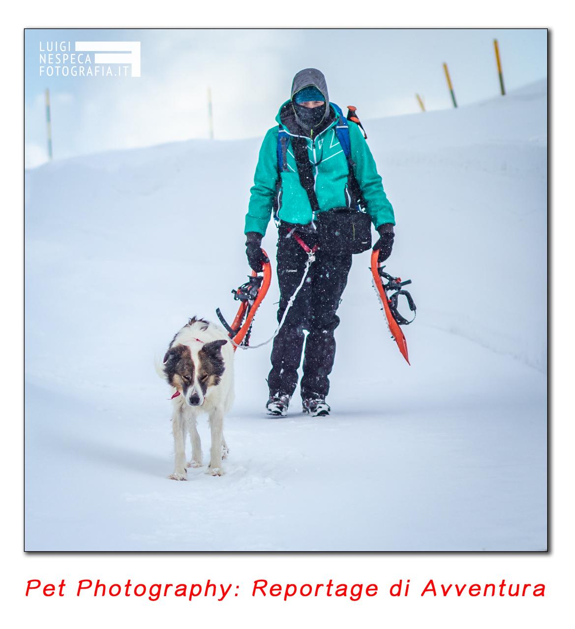 Pet Photography: reportage di avventura