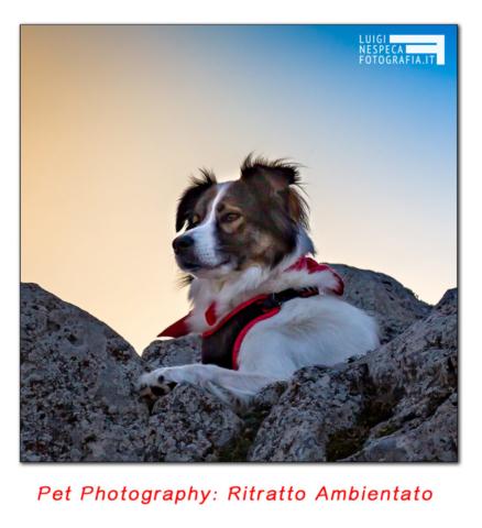 Pet Photography: Ritratto al tramonto