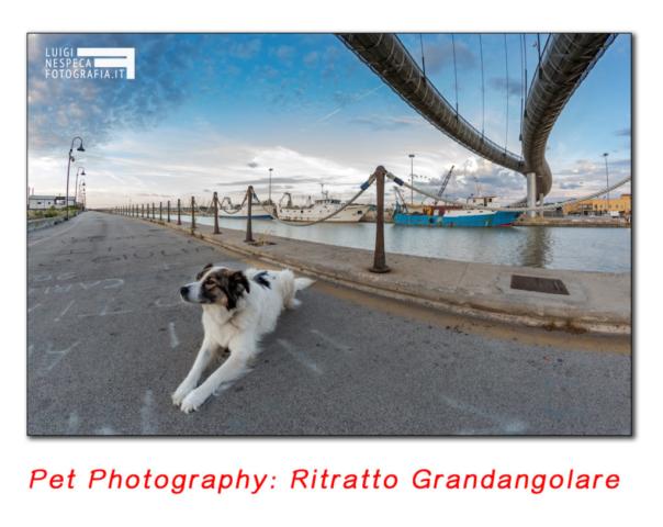 Pet Photography: ritratto con super Fish-Eye (Grandangolare)