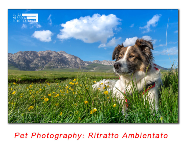 Pet Photography: ritratto ambientato in montagna