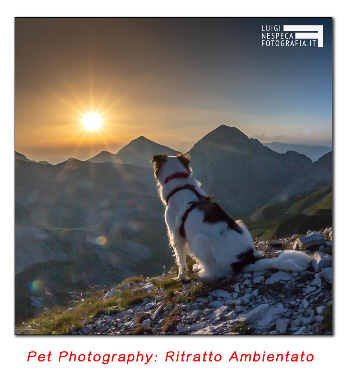 Pet Photography: ritratto epico