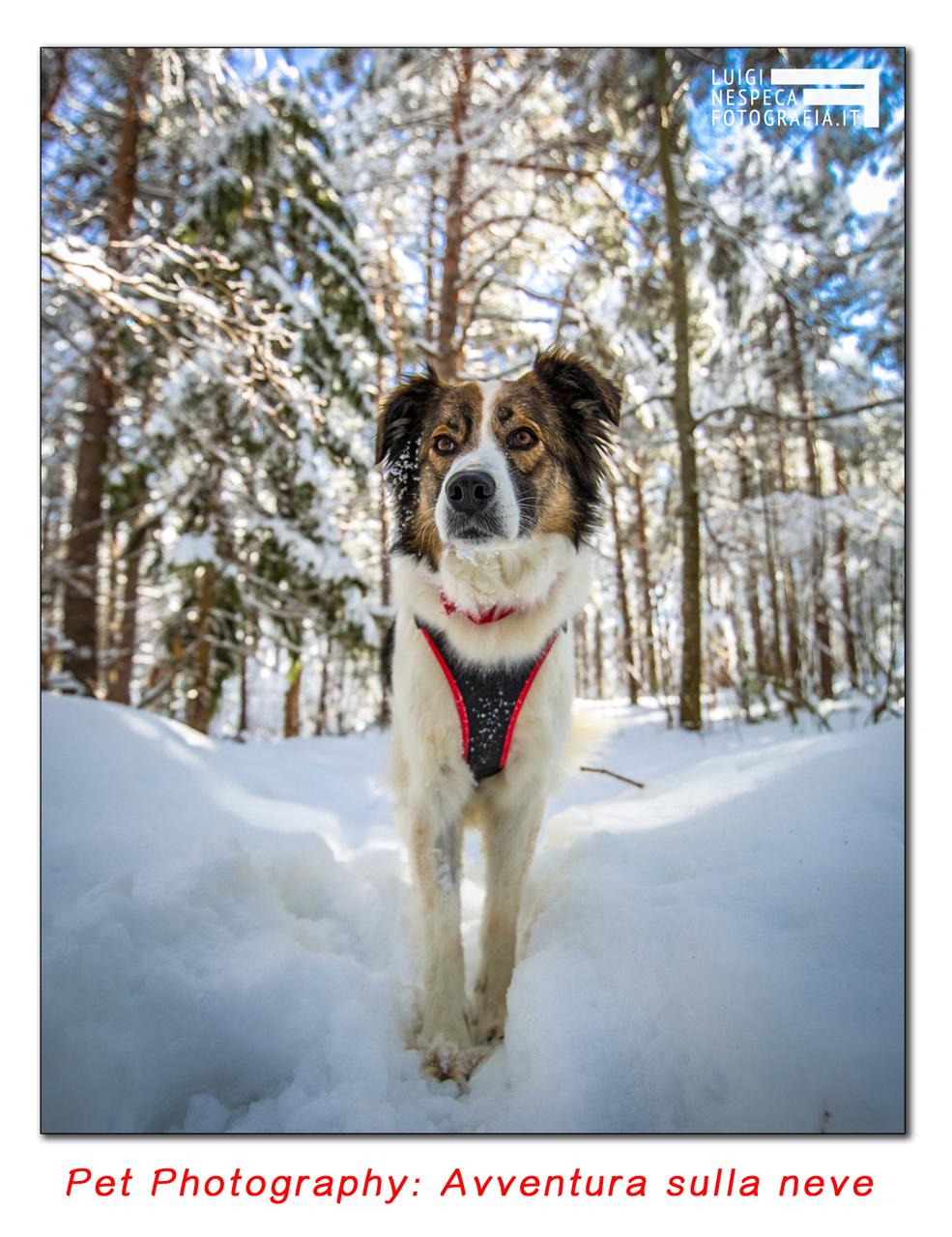 Pet Photography: reportage avventura sulla neve