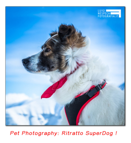 Pet Photography: ritratto Super Dog