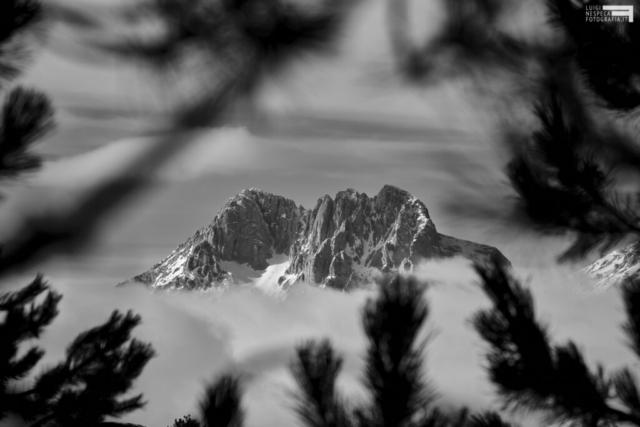 52 - Corno Grande in cornice di conifere - Vista dal Voltigno
