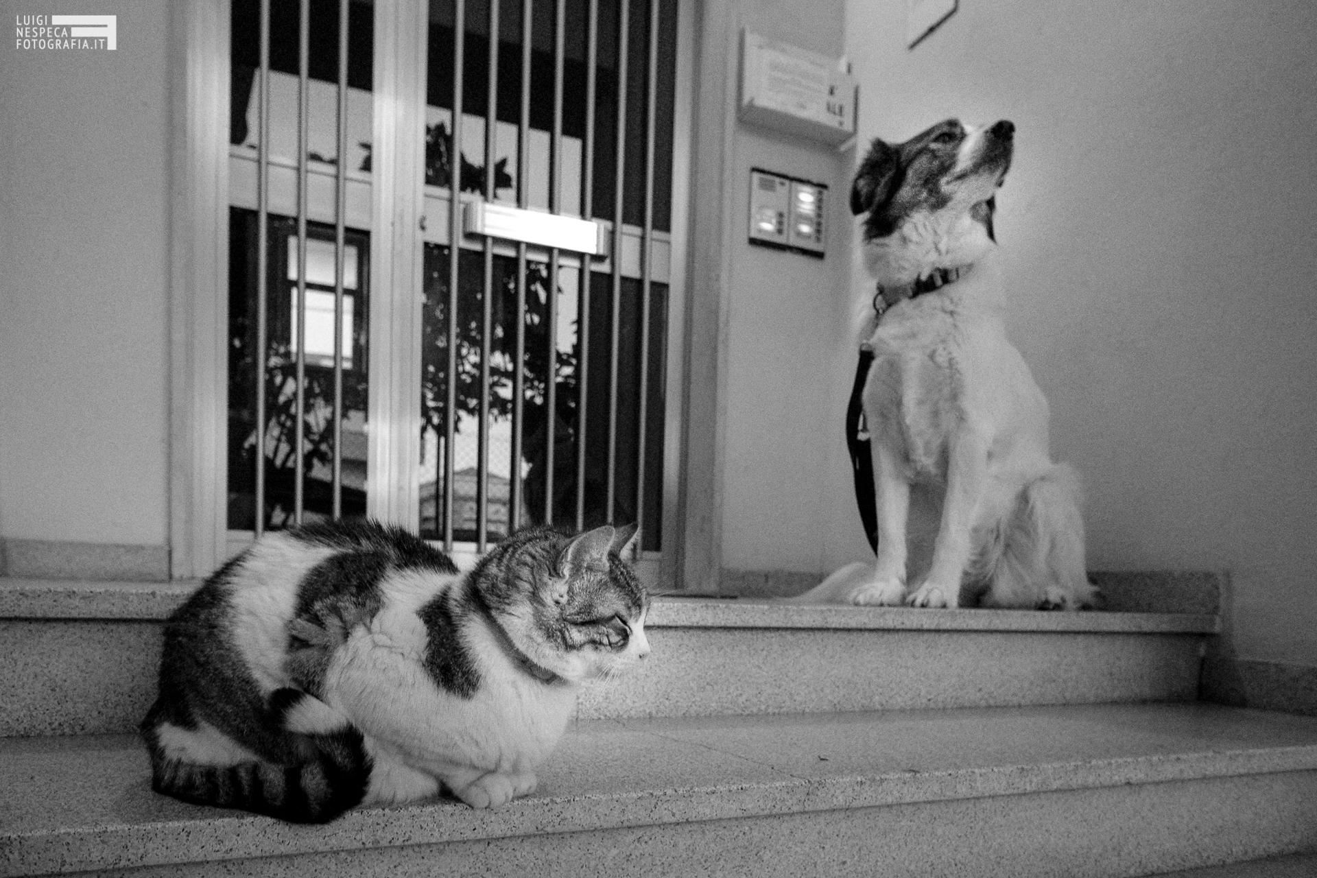 Il distanziamento sociale come spiegato dal gatto Ciccio e il cane Melody