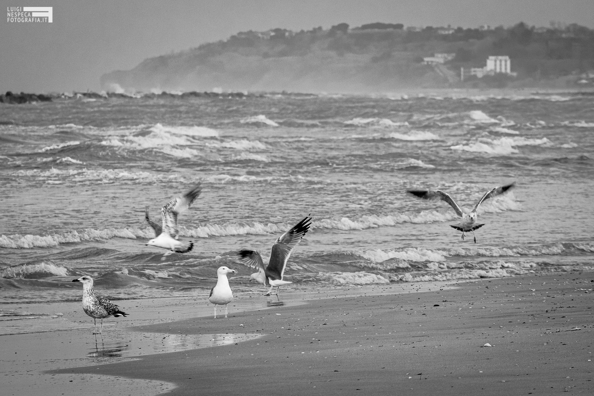 Francavilla al Mare - assembramenti non autorizzati in spiaggia