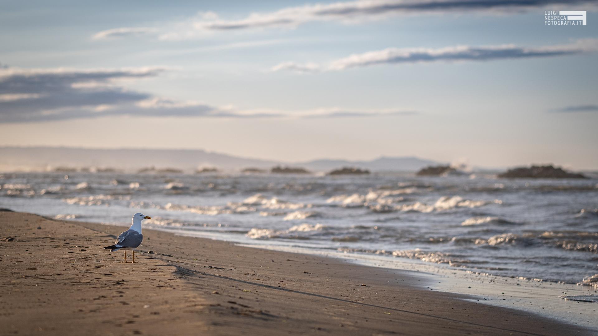 La spiaggia di Francavilla al Mare: un gabbiano nell'ultimo tramonto della FASE I