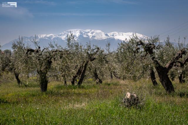 Le montagne viste dalla campagna di Francavilla al Mare: la Majella
