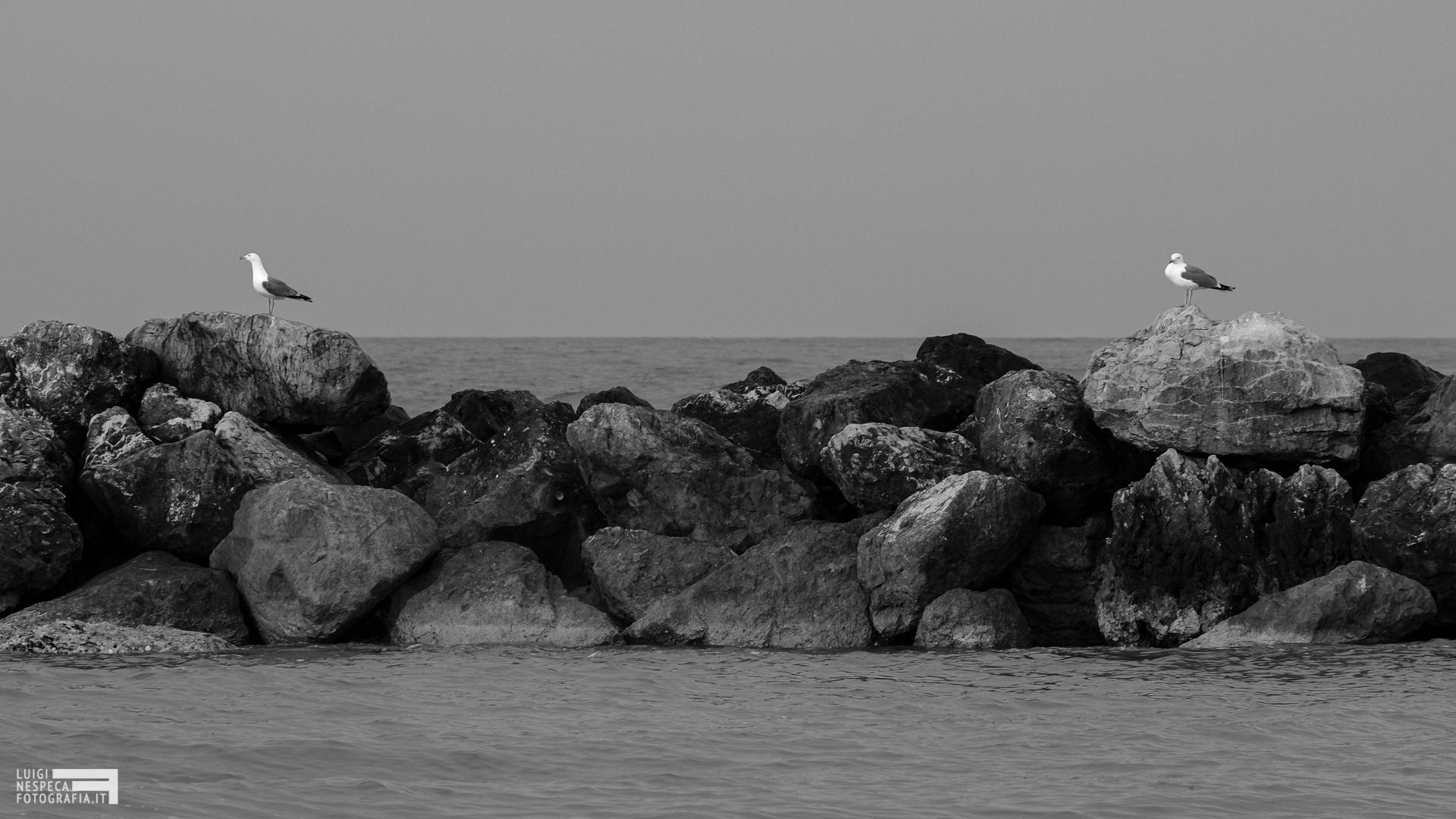 Il distanziamento sociale come spiegato dai gabbiani - Francavilla al Mare