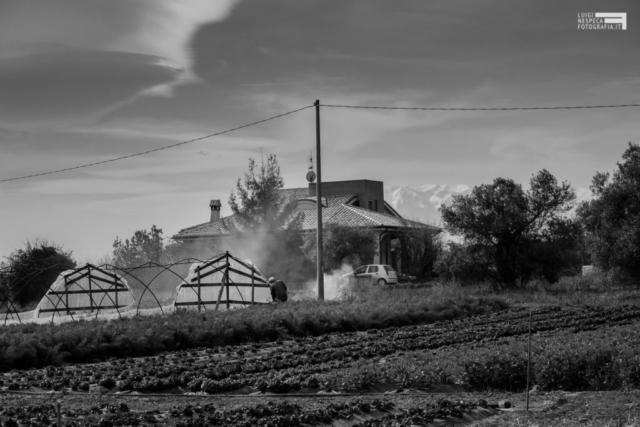 La campagna di Francavilla al Mare: il lavoro nei campi continua