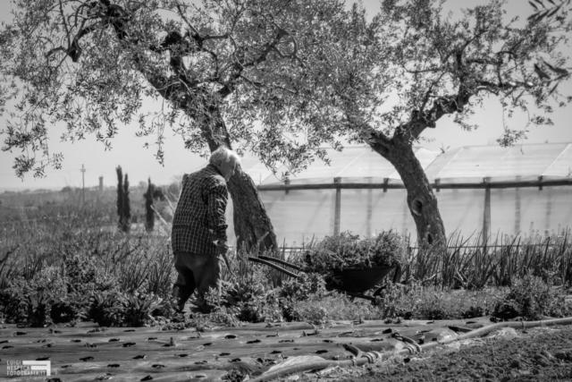 La campagna di Francavilla al Mare: il lavoro nei campi