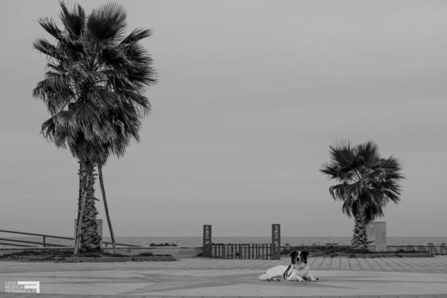 Il distanziamento sociale come spiegato dal cane Melody - Francavilla al Mare