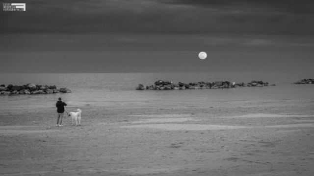 Qualche ora prima del Lockdown - la luna, un uomo e un cane